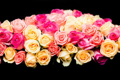 Pink and beige roses border Royalty Free Stock Photo