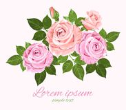 Pink and beige vector roses with green leaves. Vector pink and beige roses with green leaves on the white background wedding invitation Royalty Free Stock Photography