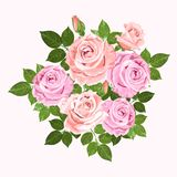 Pink and beige vector roses  wreath isolated on white. Pink and beige vector roses and green leaves wreath isolated on the white background for floral decoration Stock Images