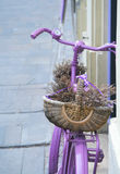 Pink bicycle with lavander basket Royalty Free Stock Photography