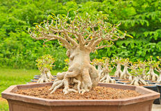 Pink Bignonia. On tree background stock photos
