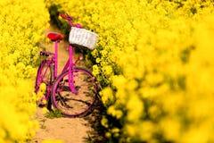 Pink bike in the field of rape Stock Photo