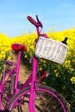 Pink bike in the field of rape. Pink bike with white basket standing in the field of yellow rape Royalty Free Stock Image