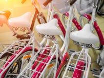 Pink bikes, Bicycle shop close-up royalty free stock photo