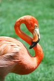 Pink bird Royalty Free Stock Photography