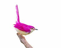 Pink bird on branch. Royalty Free Stock Images