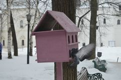 Pink birdhouse on a tree and soaring dove next to it stock photos