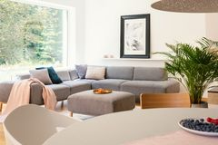 Pink blanket on grey corner couch in open space interior with table and poster near window. Real photo. Concept stock photography