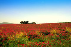 Pink blooming flowers, country landscape Stock Photo