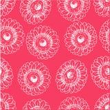 Pink blooming gerberas Stock Photos