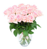 Pink blooming roses Stock Images