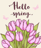 Pink blooming tulips Stock Photos