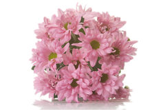 Pink blooms Stock Photography