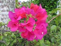Pink Blooms stock image
