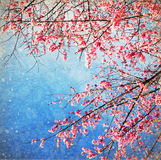 Pink blossom. On an old grunge paper Royalty Free Stock Photo