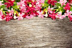Pink blossom blooming flower border and frame on wooden background. Colorful pink blossom blooming flower border and frame on wooden background with copy space stock images