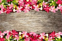 Pink blossom blooming flower border and frame on wooden background. Colorful pink blossom blooming flower border and frame on wooden background with copy space royalty free stock photo