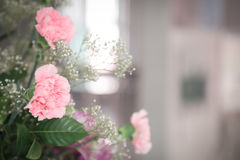 Pink blossom closeup photograph   Beautiful spring flora background Stock Images