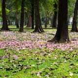 Pink blossom fall on green grass Royalty Free Stock Photography