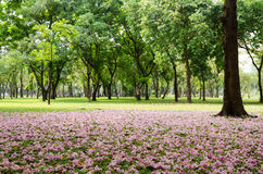 Pink blossom fall on green grass Stock Images