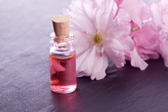 Pink blossom flower and aroma Stock Photography