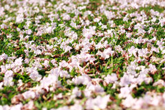 Pink blossom on the garden. The beautiful place for relaxing time stock photography
