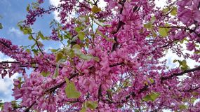 Pink, Blossom, Plant, Branch stock photography