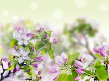 Pink spring concept Stock Image