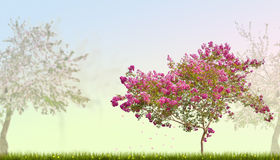 Pink blossom tree in green grass Stock Photography