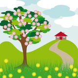 Pink blossom tree hill and house Stock Image