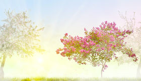 Pink blossom tree in morning mist. Pink blossom tree in green grass with flowers at morning vector illustration