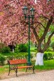 Pink blossomed sakura tree near the bench and lantern Royalty Free Stock Image
