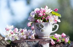 pink blossoming apple tree bouquet  in cup Stock Photo