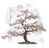 Pink Blossoming Tree Stock Photos