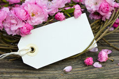 Pink blossoms. With label on wooden board Royalty Free Stock Image