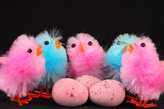 Pink and blue Easter chicks with eggs Stock Image