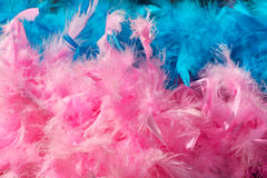 Pink blue feather boa Stock Photo