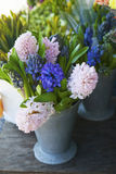The Pink and blue hyacinths in a tin can for sale Royalty Free Stock Photography