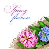 Pink and blue hyacinths Stock Photos