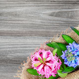 Pink and blue hyacinths Royalty Free Stock Images