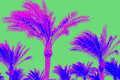Pink and blue palm trees on green background. Modern pattern Royalty Free Stock Images
