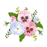 Pink and blue pansy flowers. Vector illustration. Stock Photo