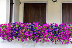 Pink and blue  petunia flowers on a balcony Stock Photography
