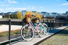 Pink and blue vintage bicycles with baskets flowers by the river Royalty Free Stock Images