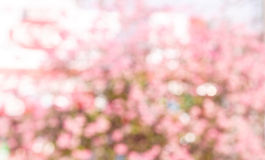 Pink  blur bokeh background Stock Images