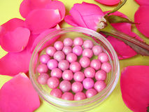 Pink blush and pink rose Royalty Free Stock Photos