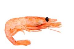Pink boiled shrimp isolated on white background Royalty Free Stock Image