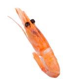 Pink boiled shrimp isolated on white background Royalty Free Stock Images