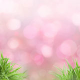 Pink bokeh background. Green grass natural background with selective focus Stock Photos