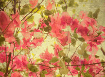 Pink bougainvillea art background Stock Photos